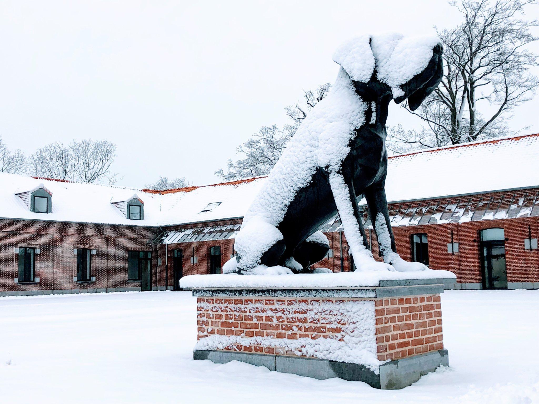 Le Dogue du Domaine de Luchin sous la neige le 23 janvier dernier (photo LOSC)